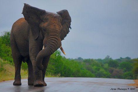 iPit: Africa